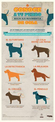 Infografía: Conoce a tu perro según sus movimientos de cola - Instituto Perro