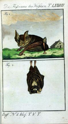 CIRCA 1830, HAND COLOURED AT A LATER DATE, BY BUFFON