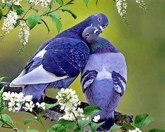 blue tit's wings