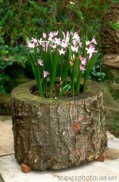 Great idea for reusing sections of tree trunks and it would add color to areas of the garden.