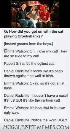 The Harry Potter cast on Crookshanks
