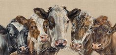 "Final scan from my original painting ""Pick'n Mix's"" size 46'' x 22'' box canvas. The cutest cows images I've collected over the years localy to me in the UK. And so happy to shear my passion and joy through my creation of this arty composition and the differences in cow breeds :))) www.dinaperejogina.com Cow Painting, Painting & Drawing, Farm Art, Cute Cows, Cow Art, Classical Art, Artist Gallery, Pictures To Draw, Types Of Art"