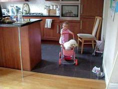 Bichon in stroller- Megan and Sophie!