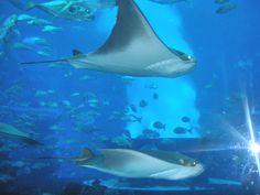 Acuario Atlantis. Dubai.