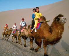 Riding unusual animals around the world.