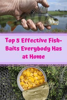 Fishing Discover Top 5 Effective Fish-Baits Everybody Has at Home Best Fishing Bait, Ice Fishing, Fishing Lures, Fishing Tackle, Fishing Gifts, Fishing Rods, Fishing Stuff, Fishing And Hunting, Fishing Cart