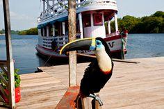 Tucano Bird, Amazonas, via Flickr.