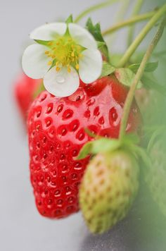 strawberry, flower, red, color, erdbeere