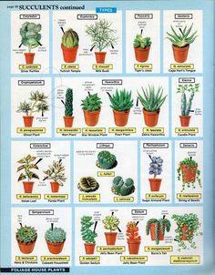 wear it out — Succulents page from 'The house plant expert' by. Don't wear it out — Succulents page from 'The house plant expert' by.Don't wear it out — Succulents page from 'The house plant expert' by. Cactus House Plants, House Plants Decor, Garden Plants, Succulent Names, Succulent Species, Succulent Gardening, Planting Succulents, Growing Succulents, Succulent Pots