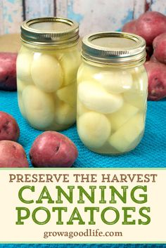 Canning potatoes is a great way to preserve them for those without a root cellar. Potatoes that are damaged or small won Canning Potatoes, Canning Vegetables, Dehydrate Potatoes, Canning Pears, Canning Tips, Canning Recipes, Harvest Potatoes Recipe, Canning Food Preservation, Preserving Food