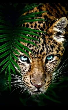 Animal Wallpaper - Welcome my homepage Animal Paintings, Animal Drawings, Beautiful Cats, Animals Beautiful, Wild Animal Wallpaper, Jaguar Wallpaper, Iphone Wallpaper, Animals And Pets, Cute Animals