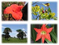 Resultado de imagen para fauna y flora en colombia