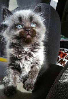 Beautiful Blue Eyes...Love The Look So Cute...❤⭐❤