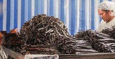 A Trip to Tahiti: The Origin of the World's Best Vanilla. We take a look at how vanilla beans are grown and cured on the farms where we source our premium vanilla in Tahiti. Origin Of The World, Vanilla Beans, Herbs Indoors, Tahiti, Allrecipes, The Cure, Herb Garden, Farms, Blog