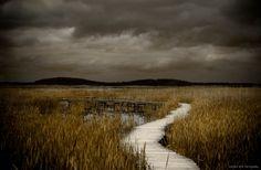 "Landscape Photography // ""Stormy Night"" Fine Art Photograph by Heather Reid // Plum Island Boardwalk Moody Dark Sea Grass Sepia Print on Etsy, $10.00"