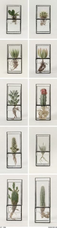 Modern and Elegant Vertical succulent Wall Planter Pots Ideas