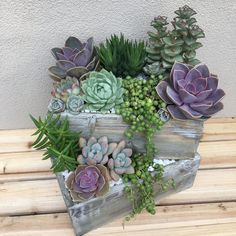 Custom succulent arrangement for a customer. Shipped as a DIY kit get yours from succulents-and-more.com #containergardeningideassucculents