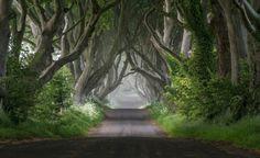 Green Roadway