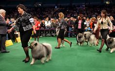 loveisspeed.......: The Westminster Dog Show 2012