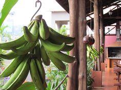 Green plantains / Plátanos verdes