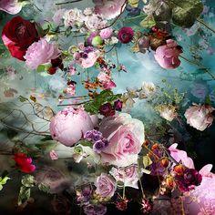 Pink Storm 6 by Isabelle Menin Botanical Prints, Floral Prints, Arte Floral, Love Art, Painting Inspiration, Flower Designs, Art Photography, Night Photography, Landscape Photography