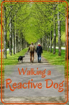 What does it mean when a dog is reactive? All dogs are good dogs and just need the right families to understand and care for them. Puppy Training Schedule, Dog Training Books, Dog Training Methods, Dog Separation Anxiety, Dog Anxiety, Reactive Dog, Pet Sitting Services, Stop Dog Barking, Positive Dog Training
