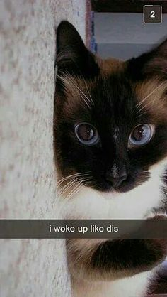 Funny Animal Pictures Of The Day – 23 Pics this cats eyes are soo pretty Cute Funny Animals, Funny Animal Pictures, Funny Cats, Animal Pics, Funny Humor, Funny Quotes, Cute Kittens, Cats And Kittens, Kitty Cats