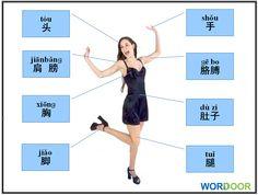 Wordoor Chinese - Body parts #chinese #mandarin #language #flashcards