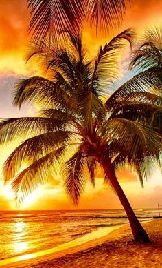 Paradise ...