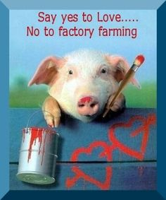 Just say no to Factory Farming