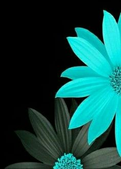 New flowers wallpaper iphone turquoise beautiful ideas Black Background Wallpaper, Flower Wallpaper, Flower Backgrounds, Wallpaper Backgrounds, Cellphone Wallpaper, Iphone Wallpaper, Turquoise Flowers, Amazing Flowers, Cute Wallpapers