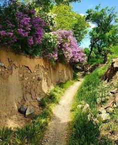 Beauty of iran Beautiful World, Beautiful Places, Beautiful Pictures, Landscape Art, Landscape Paintings, Iran Pictures, Persian Garden, Iran Travel, Bougainvillea