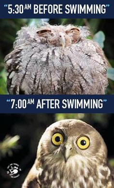 This is how i feel before and after a good morning swim! :D Swimming in the morning boosts your day!!! #earlybird #morning#swim #wakeup #earlybirdswim