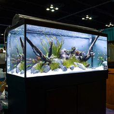 to last year's Aquascaping LIVE! Diskus Aquarium, Fish Aquarium Decorations, Tropical Fish Aquarium, Tropical Fish Tanks, Nature Aquarium, Aquarium Design, Fish Tank Wall, Fish Tank Stand, Fish Tank Design