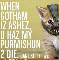 Bane kitty (The Dark Knight Rises) As long as this is not real, then it's cute. I may be on a small, nerdy Batman kick because of this movie. Crazy Cat Lady, Crazy Cats, I Am Batman, Bane Batman, Batman Stuff, Kitty Images, The Dark Knight Rises, Smosh, Dog Cat