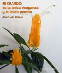 El olvido es la única venganza y el único perdón. Jorge Luis Borges