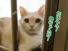 猫の不思議|うにオフィシャルブログ「うにの秘密基地」Powered by Ameba