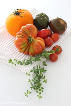 #tomatoes #Tomaten