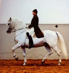 In the 'Passage', also known as the 'Spanish Trot', the horse energetically moves forward, springing from one diagonal pair of legs to the other. His elevated diagonal pair of legs are distinctly suspended, more than in a normal trot Lipizzan, Spanish Riding School, Equestrian Quotes, Horse Ears, Horse Silhouette, Horse Grooming, Dressage Horses, Horse Quotes, White Horses