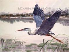 "Great Blue Heron in Flight"" by clare"