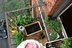 Tuinieren Op Balkon : Beste afbeeldingen van balcony gardening balkon tuinieren