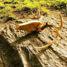 Finally done with this baby! #antlers #craving #woodwork #art de shoot_hot_fire
