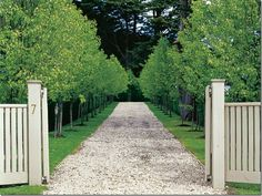 love the tidyness of a tree lined path. i can imagine cantering Pride up this aisle.