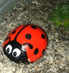 Lady bug painted rock