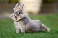 Cute bunny stretch
