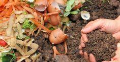 En la lombricompostera o en la compostera hay ciertos materiales o ingredientes que no debemos echar por diferentes motivos como pueden ser que se nos acidifique el humus, se enfermen las lombrices o que se pudra. Uno de los síntomas más fáciles de detectar es la presencia de un mal olor en la composta. Producir nuestro propio abono orgánico es algo que está ...