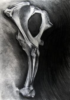 study (bone) charcoal drawing