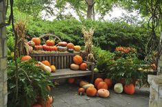 Pumpkins & Gourds! www.fiskars.com