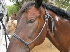 Photos of Widowmaker Trail Rides, Southlake - Attraction Images - TripAdvisor