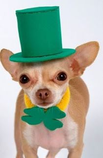 Dog Boutique, Designer Dog Clothing and Accessories for your Dog: St. Patrick's Day Is Going to the Dogs